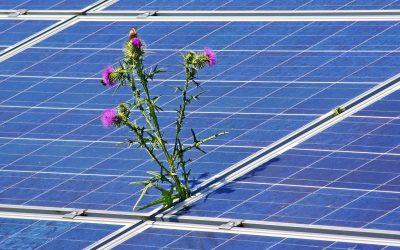 05/11/2020 – TRANSICIÓN ENERGÉTICA Avances de investigación sobre los aspectos sociales  de la transición hacia energías limpias